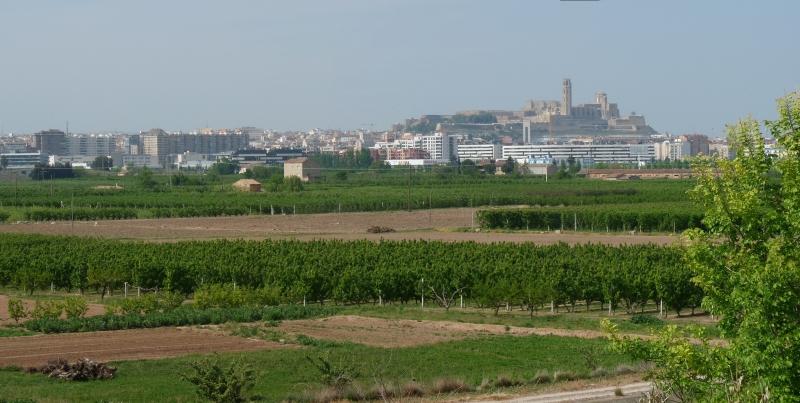 La comissió informativa de Gestió de Promoció de la Ciutat dona compte sobre elements de dinamització comercial, empresarial i turística a Lleida